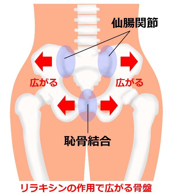 「産後の骨盤 イラスト」の画像検索結果